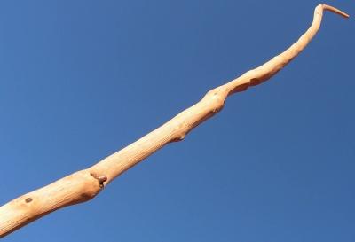 Ash flatbow 50#@28'' Frêne