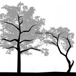 ÉTAPE 1  – Le choix de l'arbre