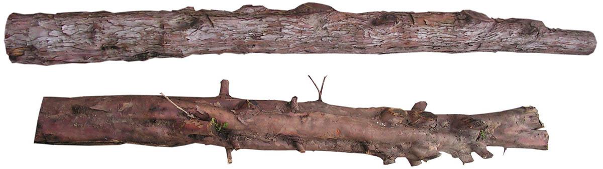 1 les troncs d'if